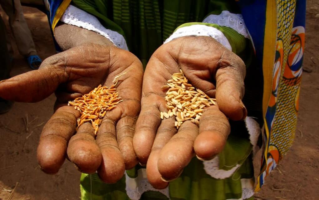 Caritas International Capaciteitsversterking rond humanitaire noden veroorzaakt door de crisis in Mali