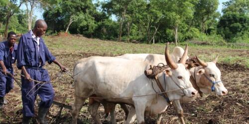 Caritas International  Caritas gaat tegen de stroom in Zuid-Soedan