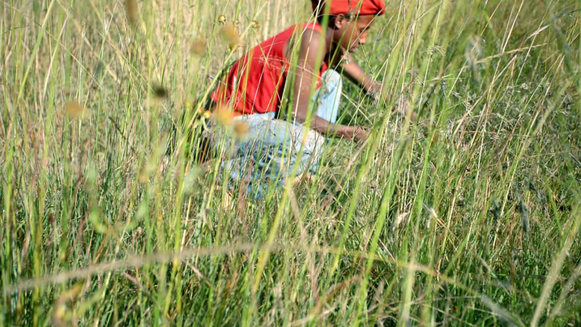 Caritas International  Diversification des sources de revenu de la communauté Menja (district de Gimbo)