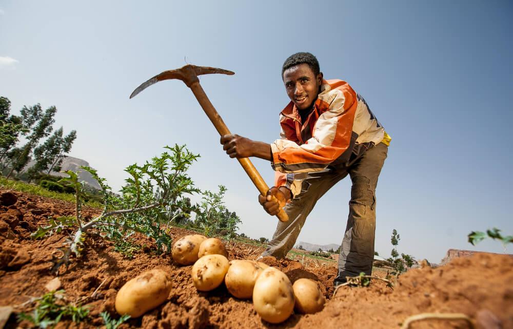 Caritas International Agriculture durable et sécurité alimentaire dans la zone de Wolayita