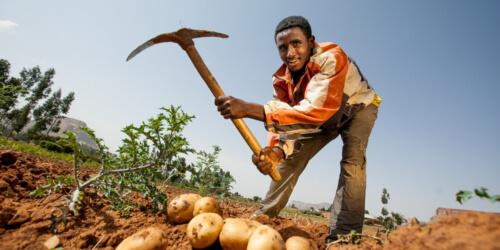 Caritas International Agriculture durable et sécurité alimentaire dans les régions du Sud