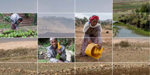 Caritas International Transformez ce paysage aride en une oasis de verdure