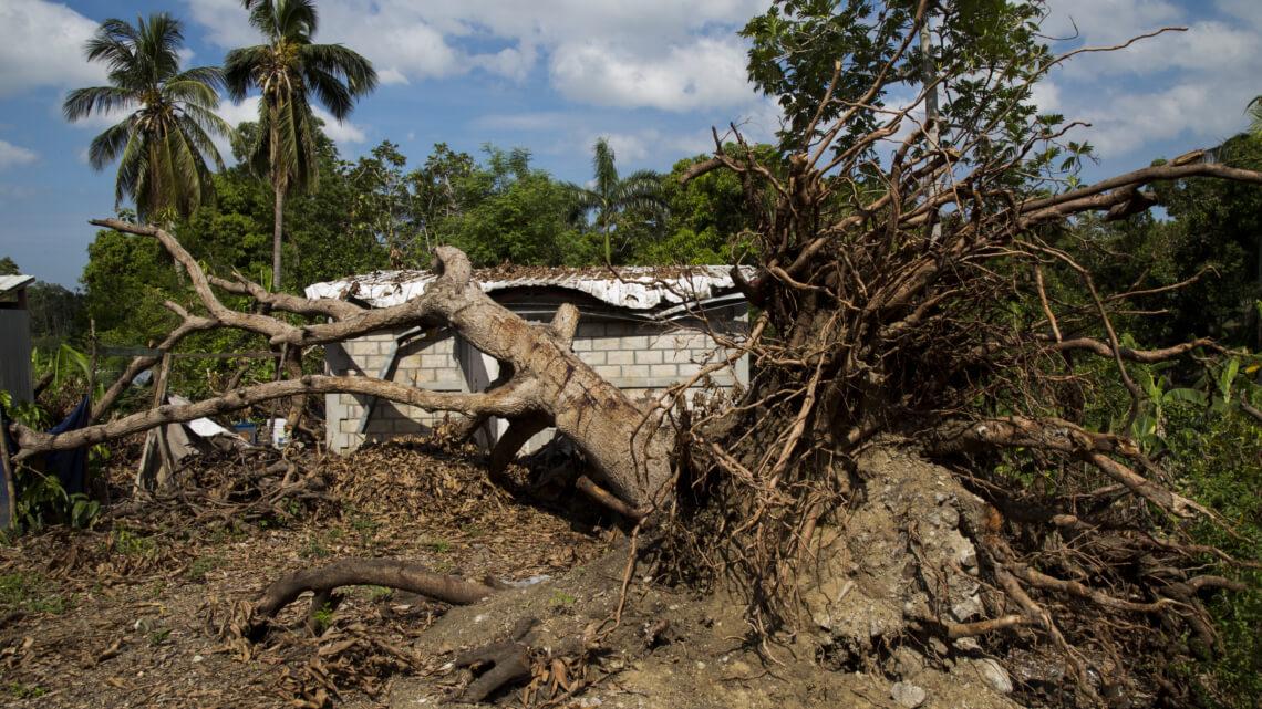 Caritas International  Haïti : Alphonse heeft zaden nodig