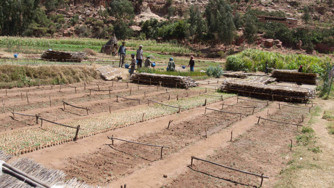 Caritas International L'esprit d'entreprise comme outil de développement agricole en Afrique, la prudence s'impose