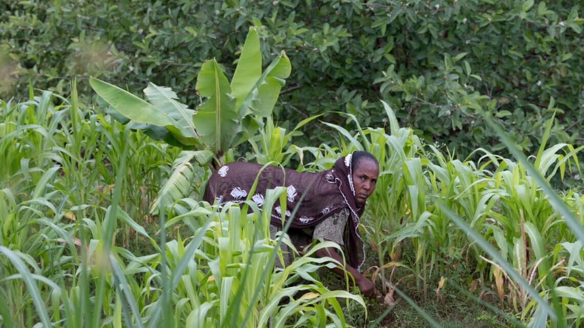 Caritas International Une agriculture adaptée aux changements climatiques et plus d'opportunités d'emplois