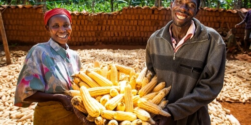 Caritas International België Project voor duurzame verbetering van de voedselbeschikbaarheid in 3 gemeenschappen in de regio Moso