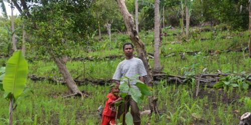 Caritas International Belgium Improvement of community livelihood through cacao rehabilitation