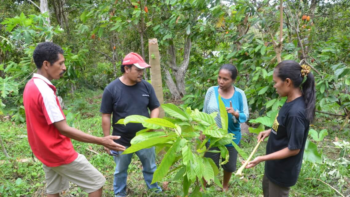 Caritas International Belgium Improvement of community livelihood through cacao rehabilitation