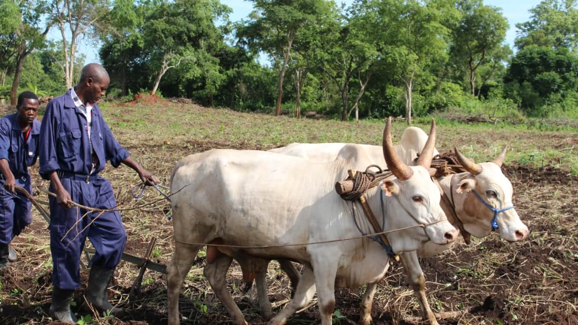 Caritas International België Caritas gaat tegen de stroom in Zuid-Soedan