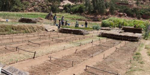 Caritas International Belgique L'esprit d'entreprise comme outil de développement agricole en Afrique, la prudence s'impose