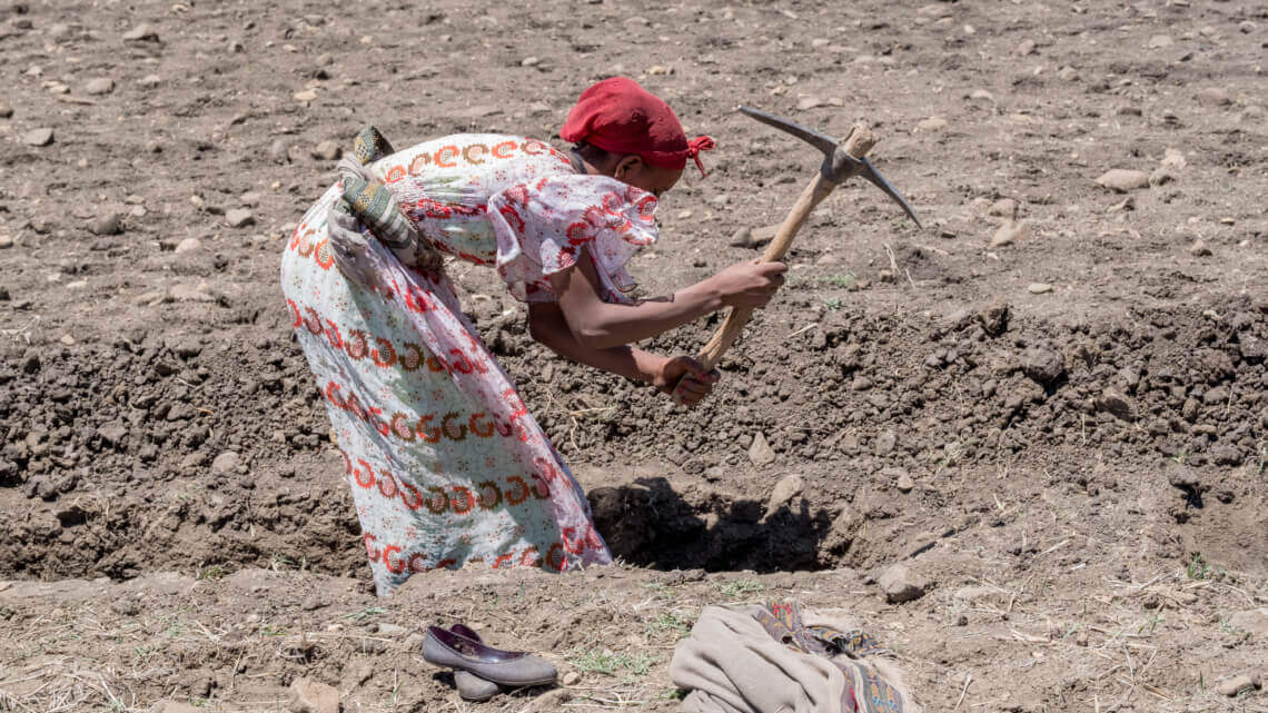 Caritas International België Economische weerbaarheid en meer inkomsten in Wolayita