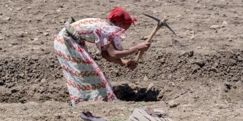 Caritas International Economische weerbaarheid en meer inkomsten in Wolayita