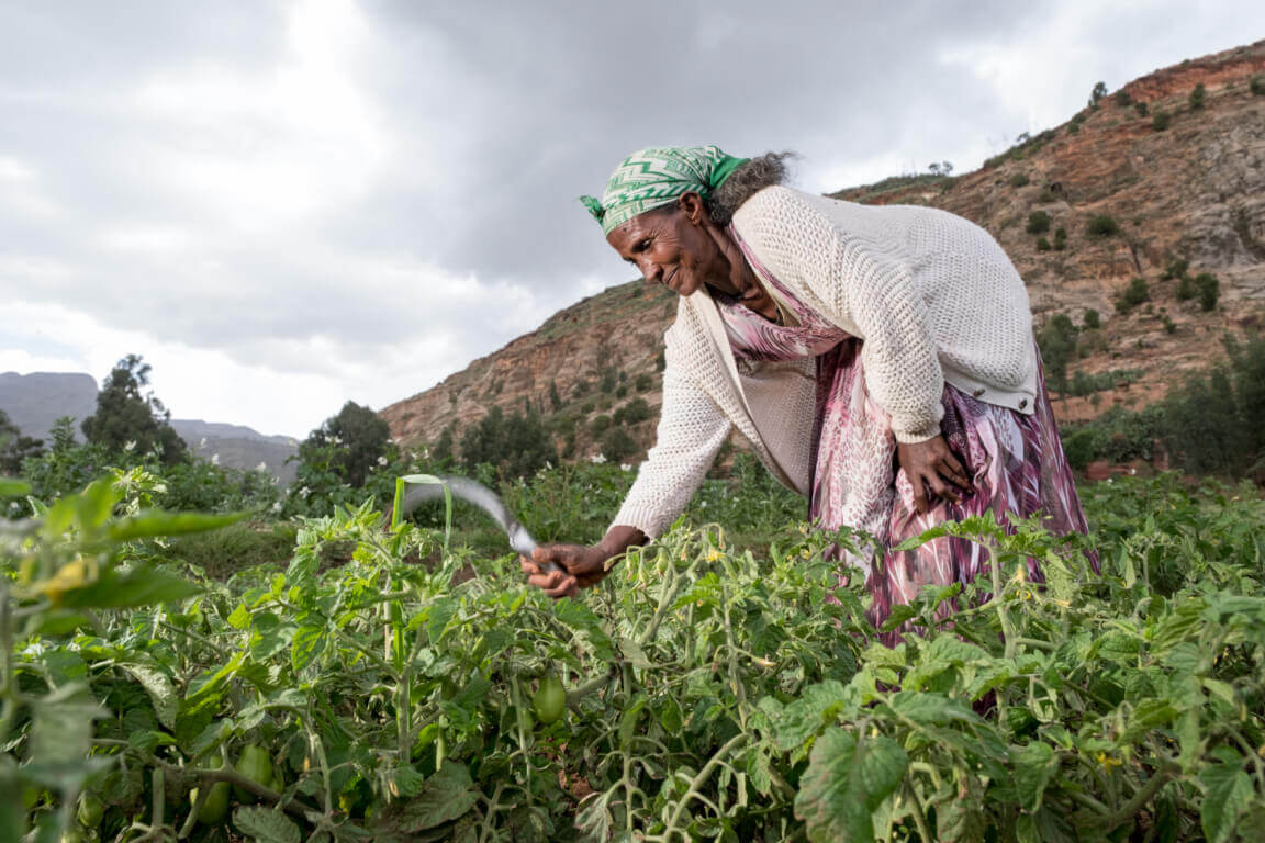 Caritas International Caritas versterkt de voedselzekerheid