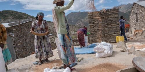 Caritas International België Duurzame verbetering van de voedselzekerheid in Ganta-Afeshum en Gulomakda