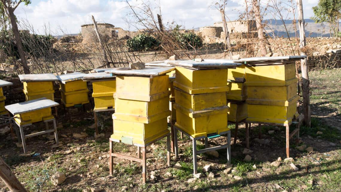Caritas International België Over bloemetjes en bijen voor de mensen zonder grond
