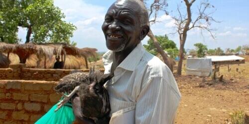 Caritas International Belgique Des poules pour un avenir meilleur dans les camps de réfugiés en Ouganda