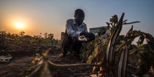 Caritas International België Campagne hongersnood Afrika: uw steun in cijfers