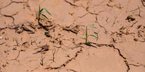 Caritas International België Landbouw in tijden van klimaatopwarming: 3 voorbeelden