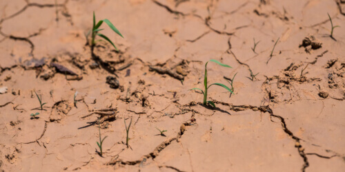 Caritas International Belgium Agriculture in times of global warming: 3 Examples