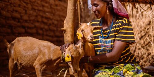 Caritas International Belgique Votre cadeau aux familles du Niger