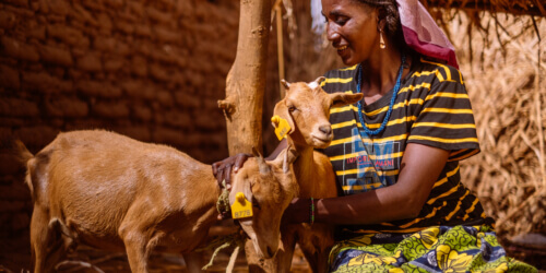 Caritas International België Uw geschenk voor families in Niger