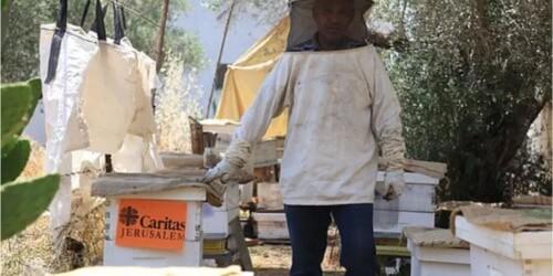Caritas International Belgique Economie durable et diversifiée à Jénine (Palestine)
