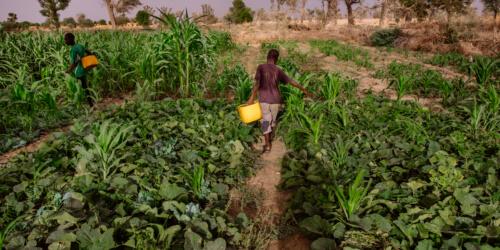 Caritas International België Hoe boeren in Niger de klimaatverandering te slim af zijn