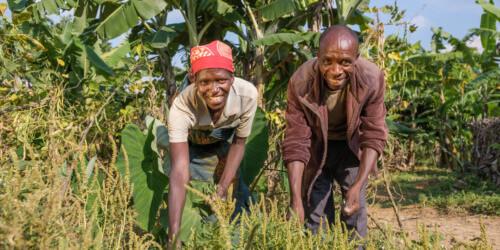 Caritas International Belgique Les communautés rurales du Burundi face au réchauffement climatique